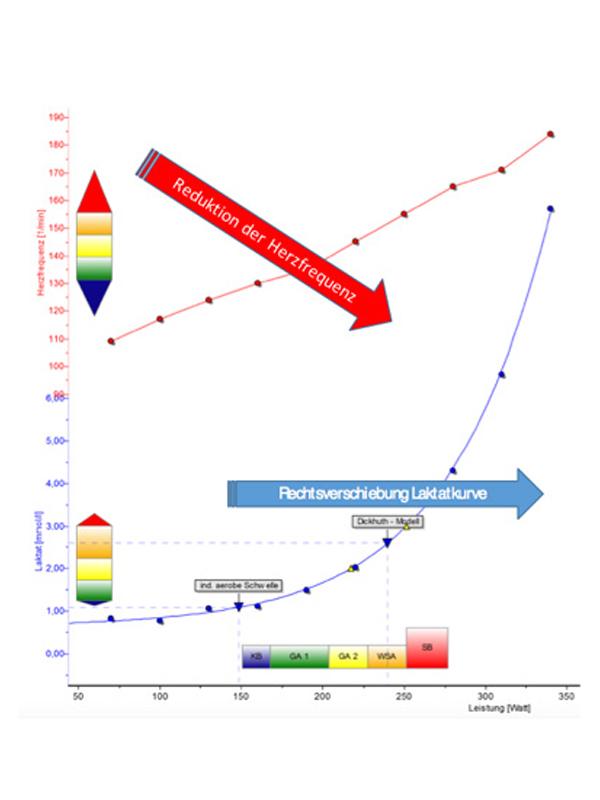 Das allgemeine Prinzip des Laktat-Stufentests als Diagramm